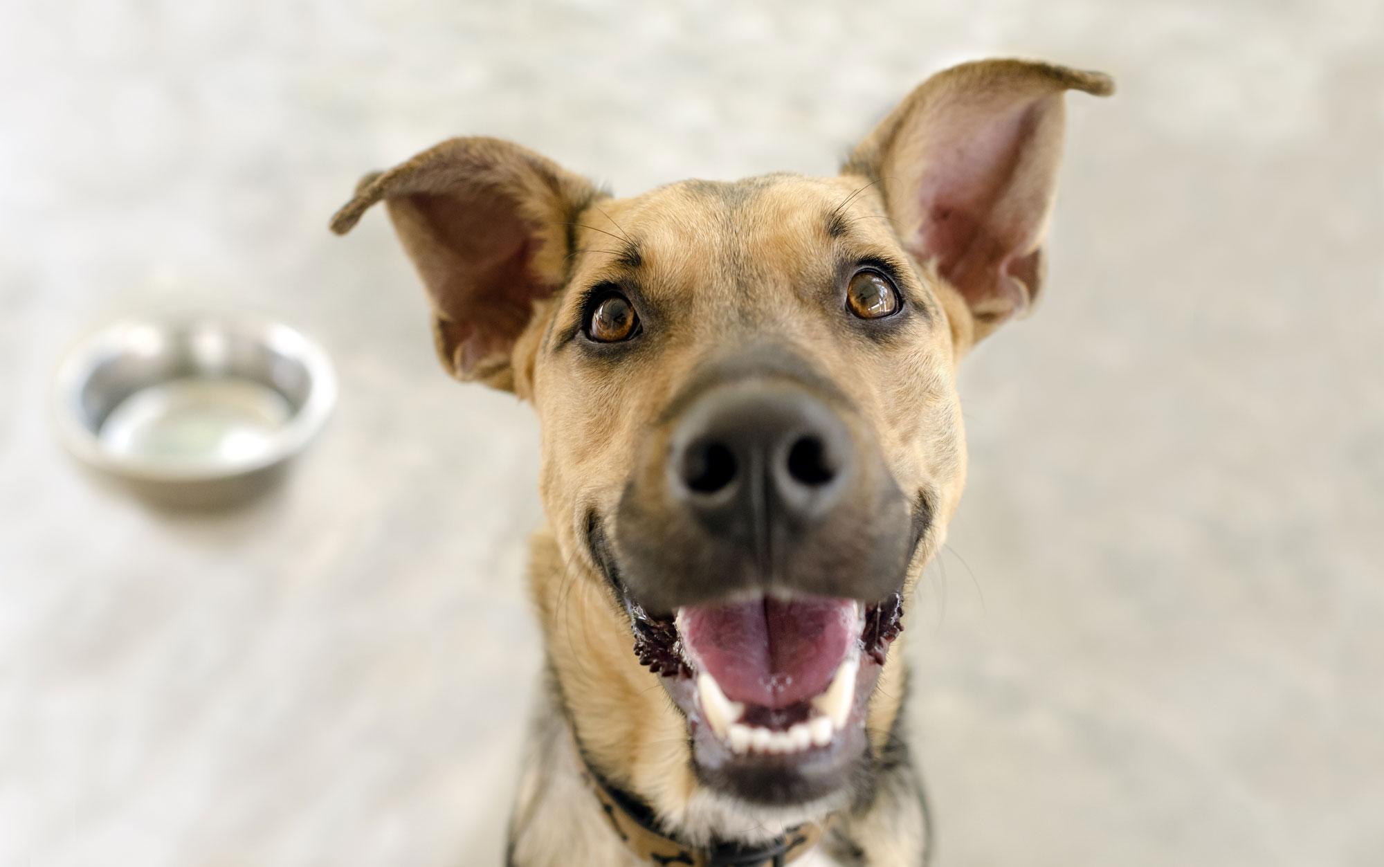 Gilmer Doghouse   Dog Daycare, Dog Boarding, Dog Grooming in